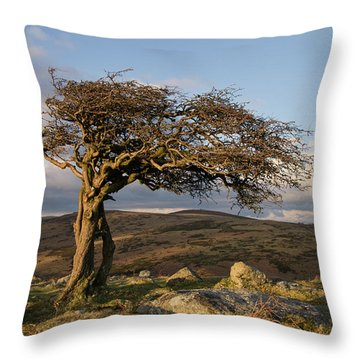 Lone Tree On Dartmoor Throw Pillow