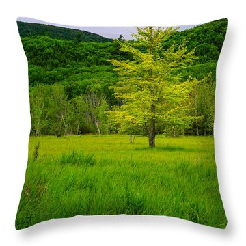 Lone Tree Sieur De Mont Woodland Acadia Throw Pillow