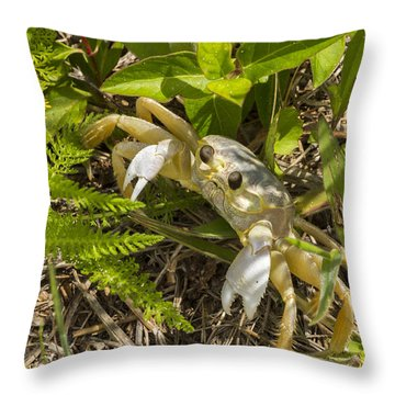 Lonely Atlantic Ghost Crab Throw Pillow
