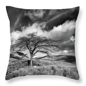 Lonely Conifer,the Struggle,ambleside Throw Pillow