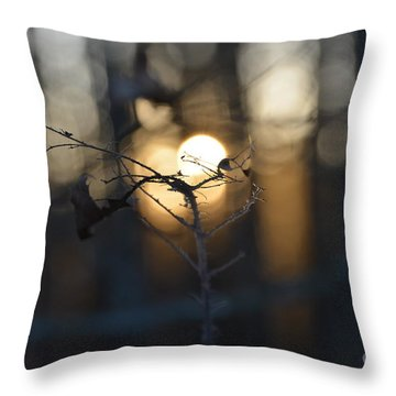 Lonely Tree Branch With Bokeh Love -georgia Throw Pillow