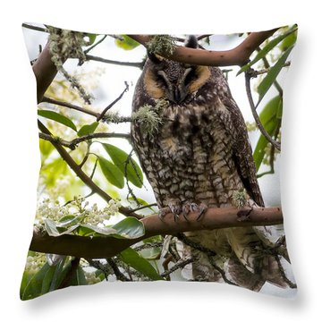 Long-eared Owl Throw Pillow by David Gn