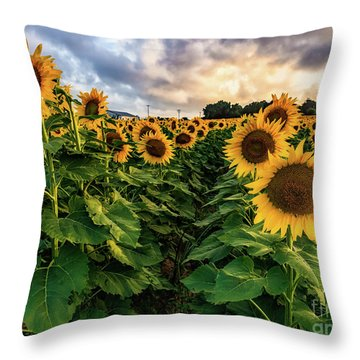 Long Island Sunflowers  Throw Pillow
