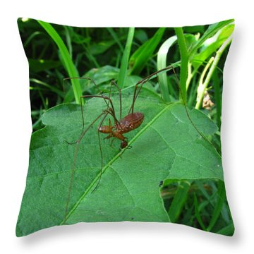 Long Legged Harvestman Throw Pillow