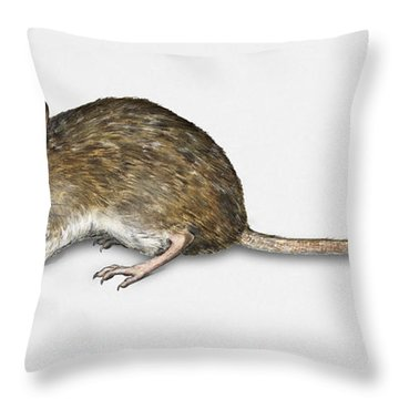 Throw Pillow featuring the painting Long Tailed Field Mouse Apodemus Sylvaticus - Wood Mouse - Moulo by Urft Valley Art