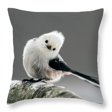 Charming Long-tailed Look Throw Pillow