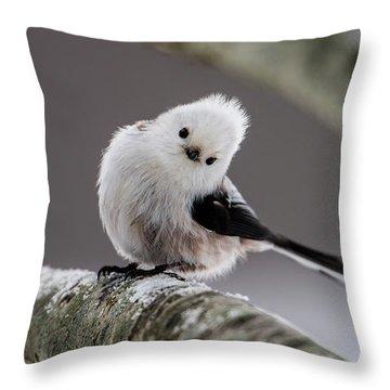 Long-tailed Look Throw Pillow