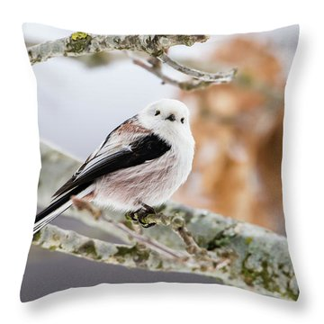 Long-tailed Tit Throw Pillow by Torbjorn Swenelius