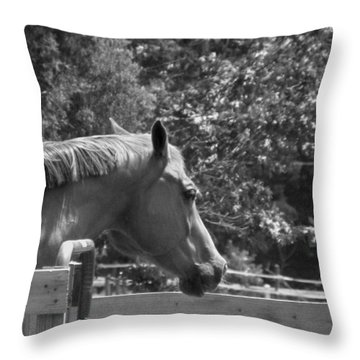 Throw Pillow featuring the photograph Longing by Sandi OReilly