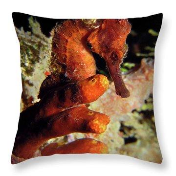 Longsnout Seahorse, St. Croix, U.s. Virgin Islands 2 Throw Pillow