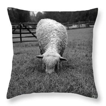 Longwool Sheep Grazing Throw Pillow