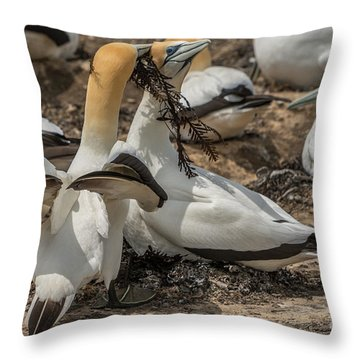 Look What I've Brought For You Throw Pillow
