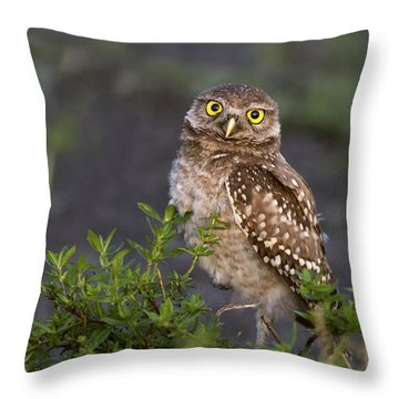 Look Who Is Up Early Throw Pillow