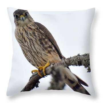 Looking At You...... Throw Pillow by Dan Williams