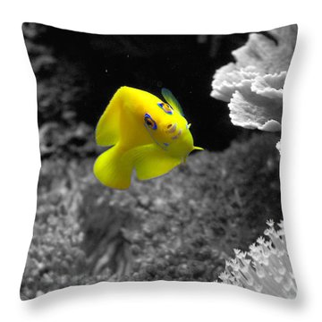 Throw Pillow featuring the photograph Looking At You by Deniece Platt