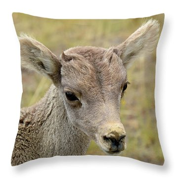 Throw Pillow featuring the photograph Looking At You Kid by Bruce Gourley