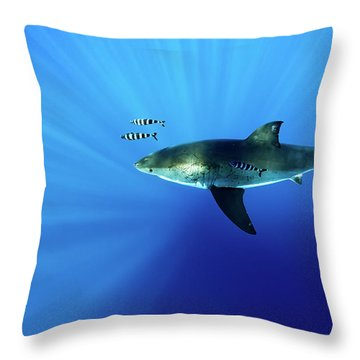 Looking Down Throw Pillow by Shane Linke