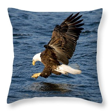 Looking For Fish Throw Pillow by Larry Ricker