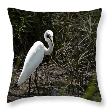 Throw Pillow featuring the photograph Looking For Lunch by Tamyra Ayles