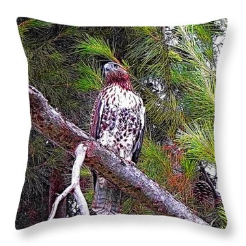 Looking For Prey - Red Tailed Hawk Throw Pillow