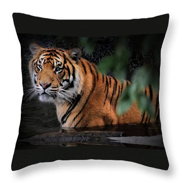 Looking Oh So Sweet Throw Pillow