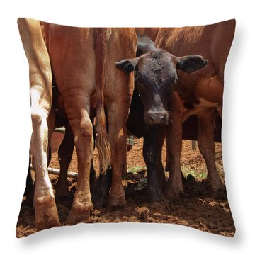 Throw Pillow featuring the photograph Looking Out The Rear by Roger Mullenhour