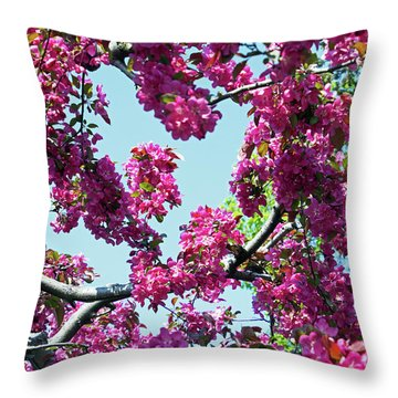 Looking Skyward Throw Pillow