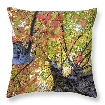 Looking Up - 9670 Throw Pillow