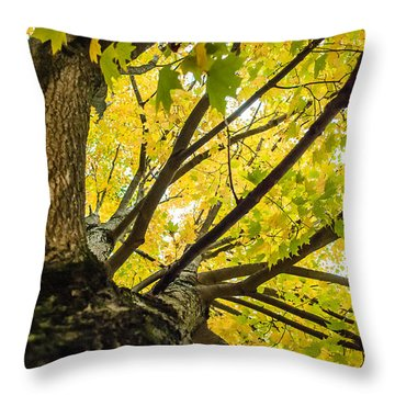 Looking Up - 9676 Throw Pillow