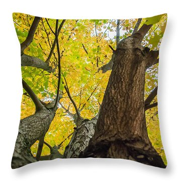 Looking Up - 9682 Throw Pillow