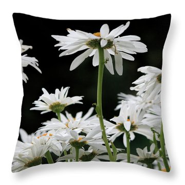 Looking Up At At Daisies Throw Pillow