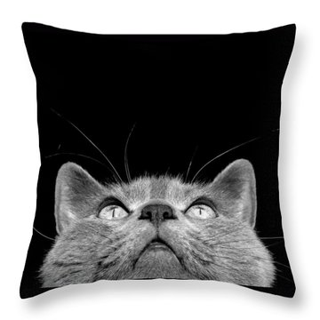 Looking Up Throw Pillow by Laura Melis