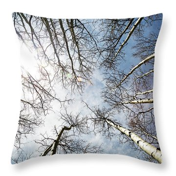 Looking Up On Tall Birch Trees Throw Pillow