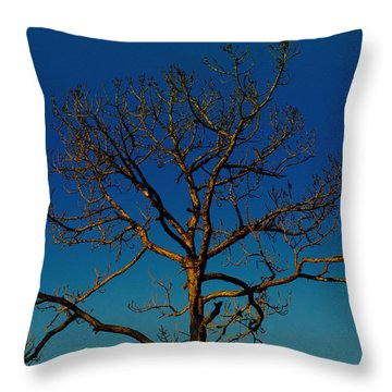 Looking Up, Sunrise, Myakka State Forest Throw Pillow