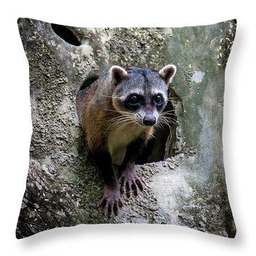 Lookout Throw Pillow
