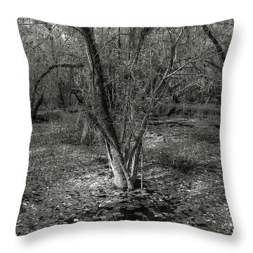 Loop Road Swamp #3 Throw Pillow