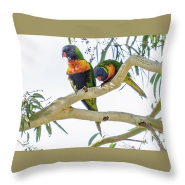 Throw Pillow featuring the photograph Lorrikeets 01 by Werner Padarin