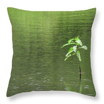 Lost Throw Pillow by Rosalie Scanlon