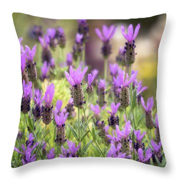 Throw Pillow featuring the photograph Lots Of Lavender  by Saija Lehtonen