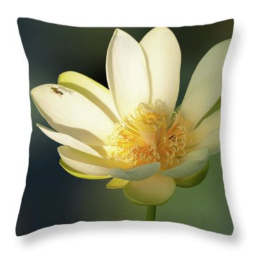 Lotus Beauty Throw Pillow by Carolyn Dalessandro