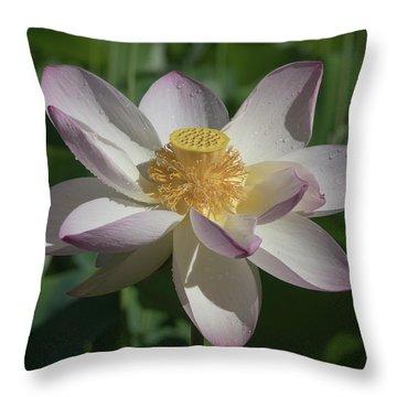 Lotus Flower In Bloom Throw Pillow