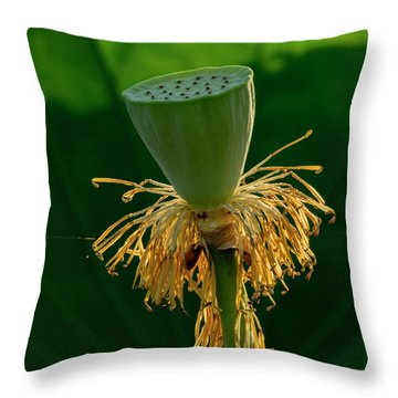 Throw Pillow featuring the photograph Lotus Pod 2017 3 by Buddy Scott