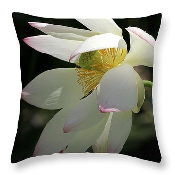 Lotus Under Cover Throw Pillow by Sabrina L Ryan