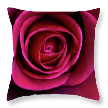 Throw Pillow featuring the photograph Love Is A Rose by Linda Lees