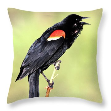 Throw Pillow featuring the photograph Love Song by Shane Bechler
