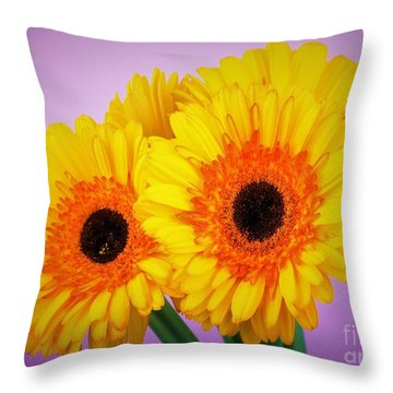 Lovely And Beautiful - Gerbera Daisies Throw Pillow