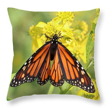 Lovely Monarch Throw Pillow