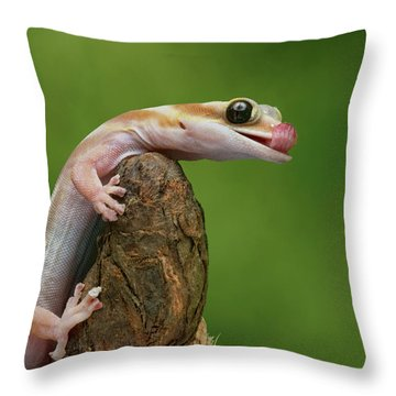 Throw Pillow featuring the photograph Lovely Water - Velvet Gecko by Nikolyn McDonald