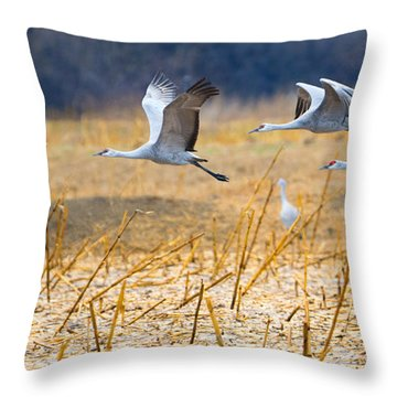 Low Level Flyby Throw Pillow by Mike Dawson