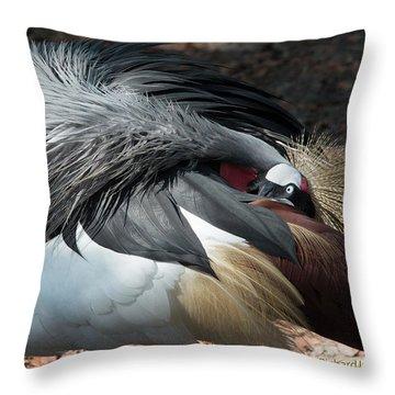 Throw Pillow featuring the photograph Lowry Park Zoo Bird by Richard Goldman